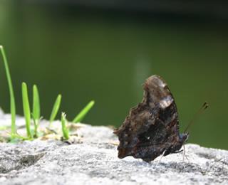 城壁にとまる蝶々
