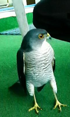 名前の知らない鳥!