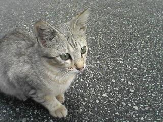 路地猫その2