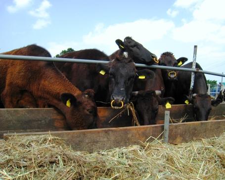 配合飼料よりも干草の方が体に上等どぅ!